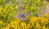 Female--Upperside--Koosharem_Canyon_Road2C_Koosharem2C_Sevier_County2C_Utah2C_July_212C_2012.JPG