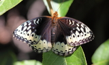 Female--Upperside--Lamb_s_Canyon2C_Summit_County2C_Utah2C_August_92C_2011.JPG