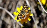 Upperside--Bullion_Canyon2C_Paiute_County2C_Utah2C_September_42C_2010~0.JPG