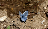 Upperside--Ephraim_Canyon2C_Sanpete_County2C_Utah2C_July_22C_2011~0.JPG