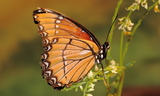 obsoleta.JPG