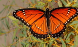 obsoleta_2.JPG