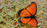 obsoleta_3~0.JPG