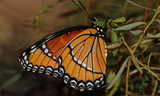 obsoleta_5a.JPG