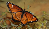 obsoleta_6.JPG